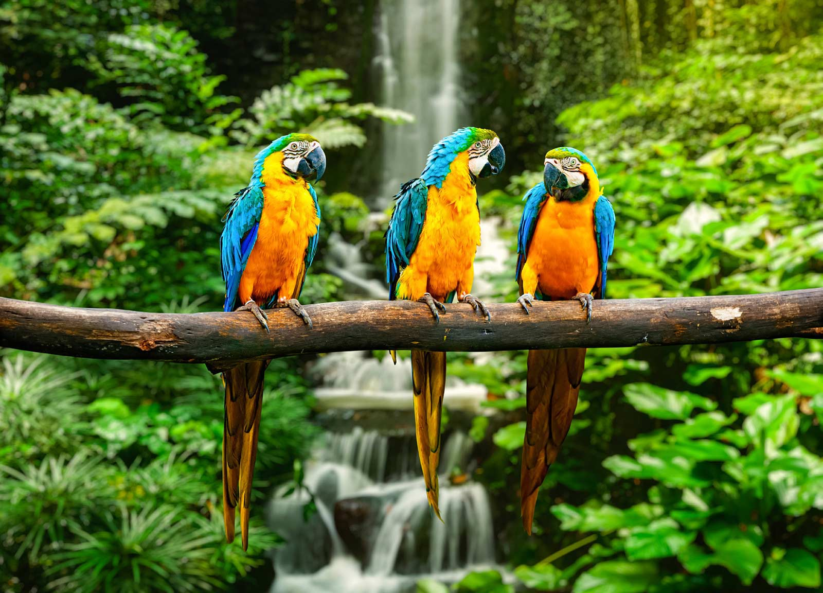 istockBlue-Yello-Macaw-slider